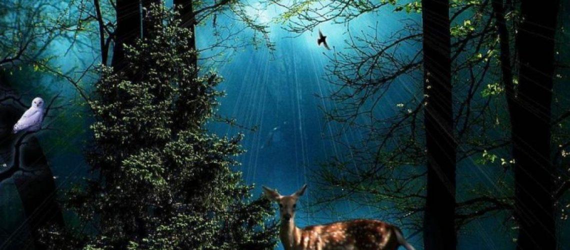 Florestas mágicas